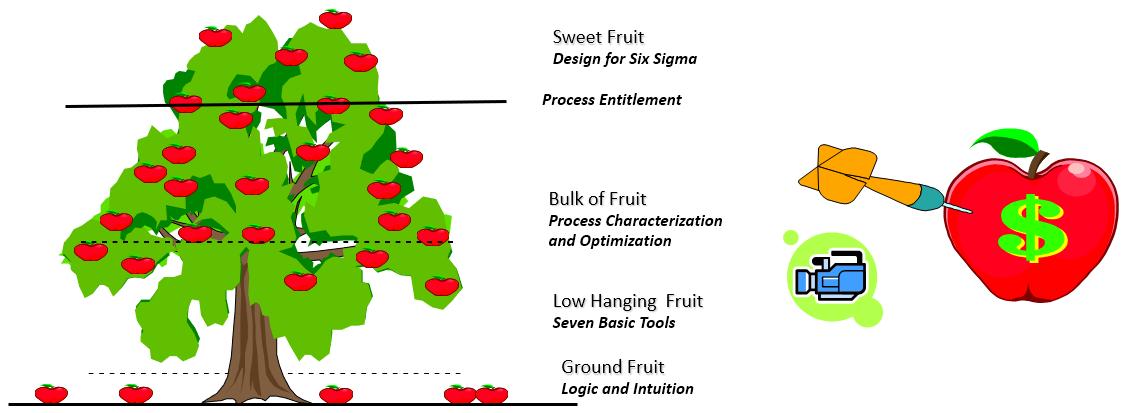 Harvesting the Fruit of Process Improvement